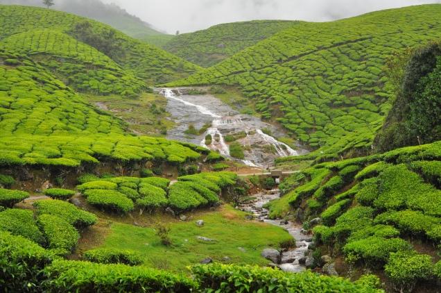 kerala tea